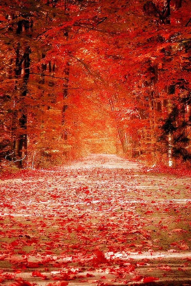 壁纸 枫叶 红枫 树 640_960 竖版 竖屏 手机图片